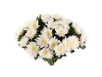Траурный букет из хризантем (одноголовая)